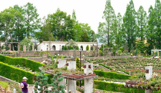 西宮から30分!伊丹市の荒牧バラ公園を現地レポ!開花状況やアクセスなどのお出かけ情報もご紹介